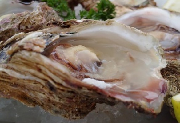 Chapter Eight – Pies, oysters & chops chutney #DeviExploresSA